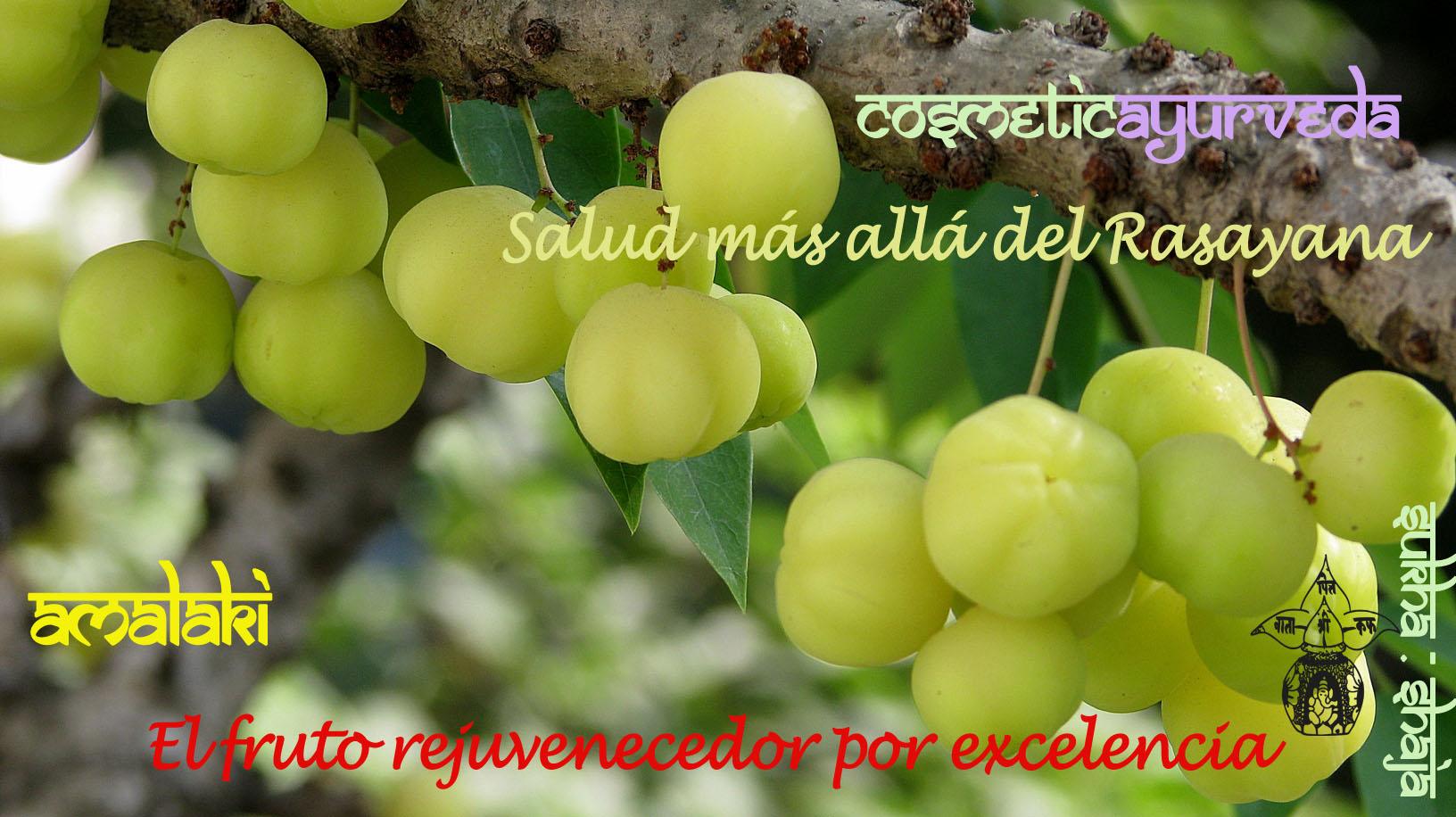 AMALAKI: ¡el fruto rejuvenecedor!