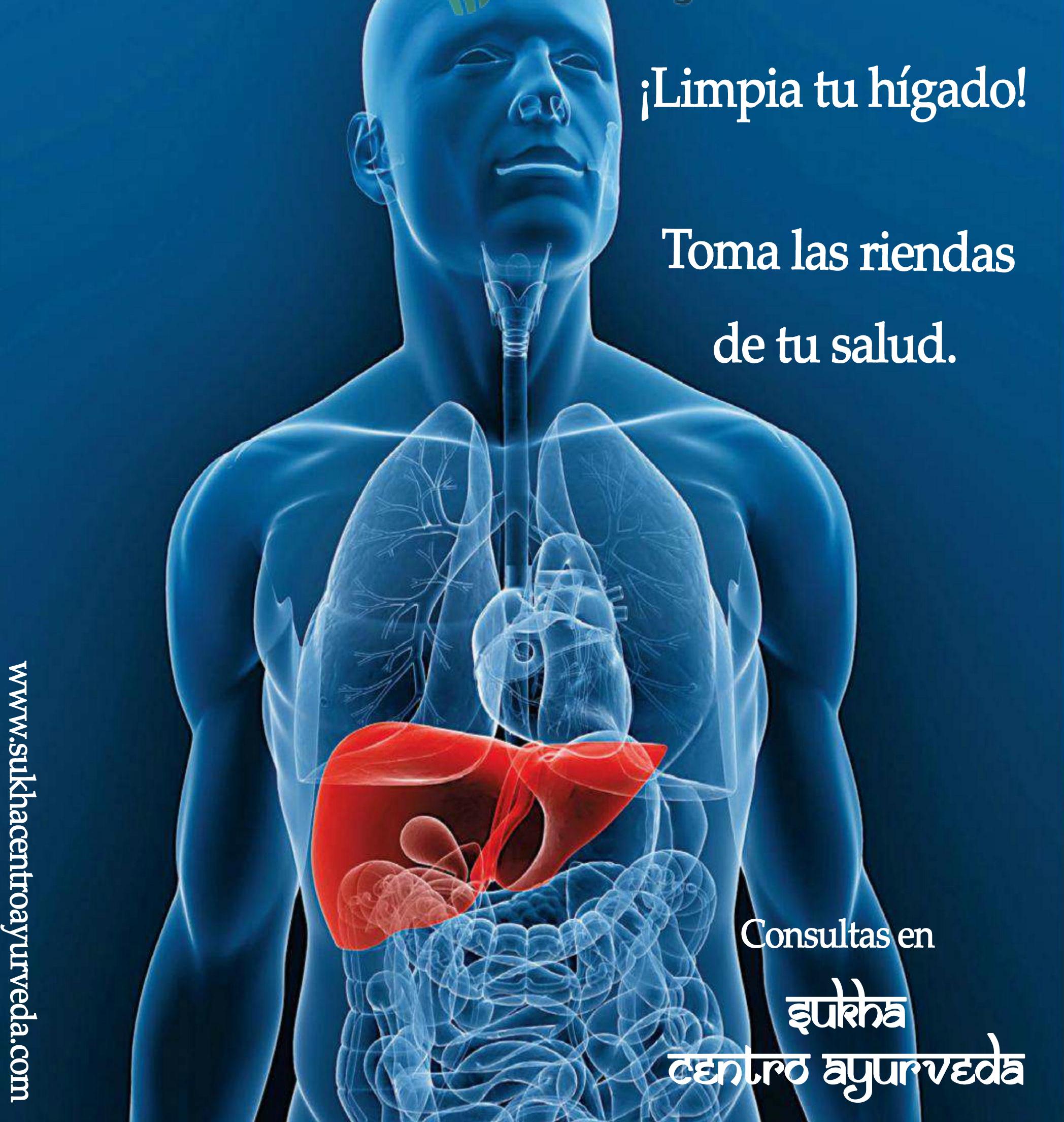 HÍGADO: Fábrica principal y centro de desintoxicación del cuerpo ...