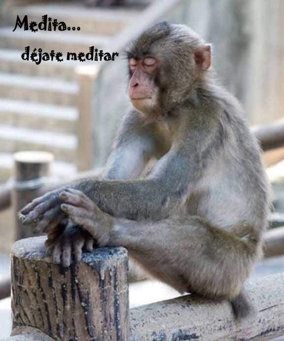 medita-monkey