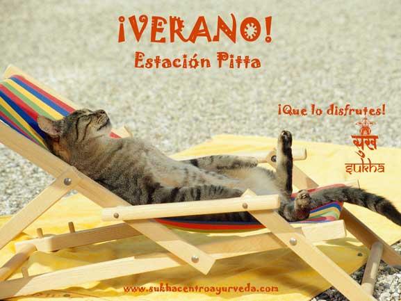 summer-cat-nap-copia