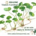 Para la memoria: Brahmi