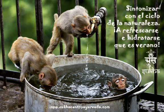 monos-verano