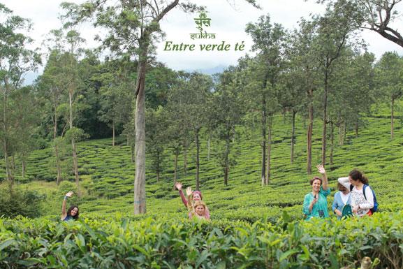 verde-té