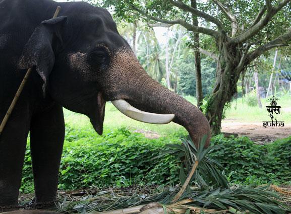 86.triprayar-elefante