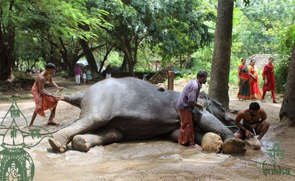 87.kerala-elefant